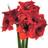 Especial Floresfrescas