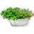 Enviar Plantas