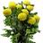 Anastasia amarilla pompón