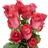 Rosas raphaella