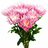 Anastasias rosas