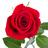 Ramo de 42 Rosas Rojas