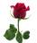 Rosas Rojas Tallo Largo