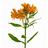 Ramo Alstroemeria Naranja