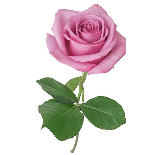 Ramo Rosas Hermosas Enviar Flores a domicilio floresfrescascom