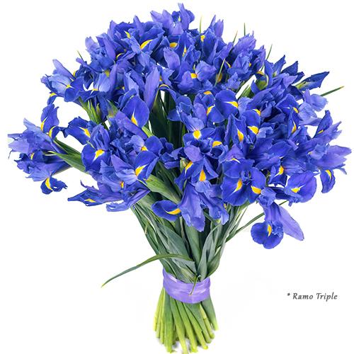 enviar iris azules enviar flores a domicilio. Black Bedroom Furniture Sets. Home Design Ideas