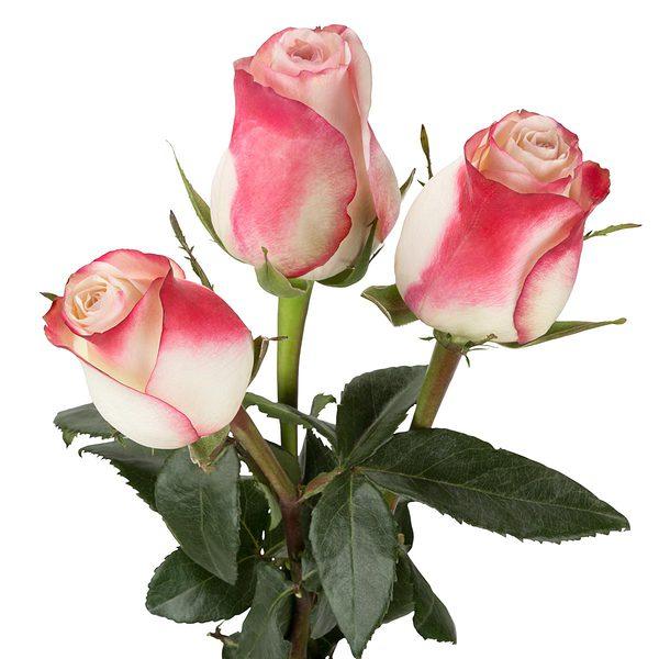 ramo rosas sweetness - Imagenes De Ramos De Rosas