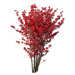 Tres Rosas Navidad