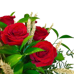 12 Rosas de Sant Jordi