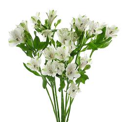 Alliums y Alstroemerias