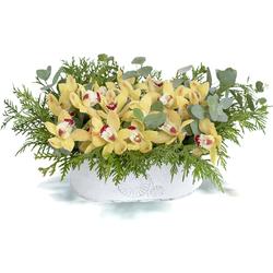 Comprar Orquídeas