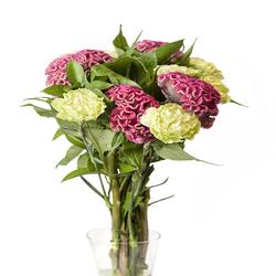 Celosía Flor
