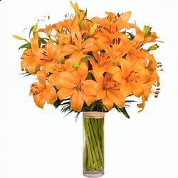 Lilium naranja