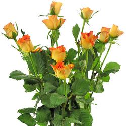Rosas Inka
