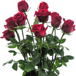 Rosas rojas classic