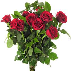 Rosas rojas sexy red