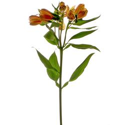 Alstroemeria naranja