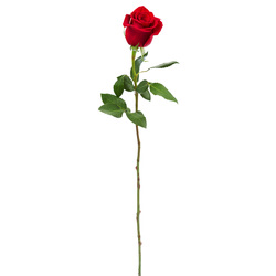 Ramo de 17 Rosas Rojas