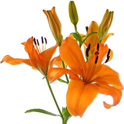 Ramo Multiflor Naranja