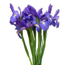Ramo Iris azules
