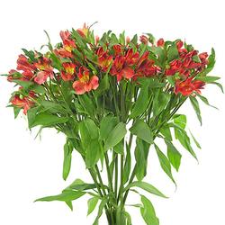 Ramo Alstroemeria roja