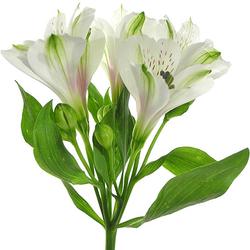Ramo Multiflor Iris