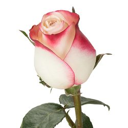 Ramo Rosas Sweetness