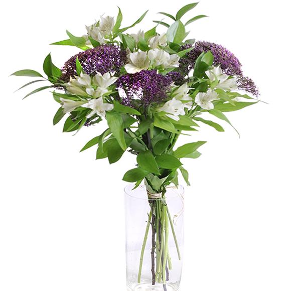 Especial Trachelium Flores Baratas A Domicilio