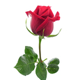 3 Rosas Tallo Largo Rojas