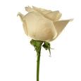 3 Rosas Tallo Largo Blancas