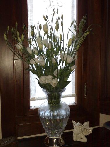 Lisianthus blanco