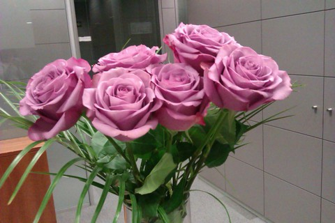 Rosas Cool Water