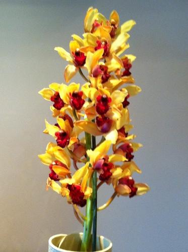 Orquídeas en Flor