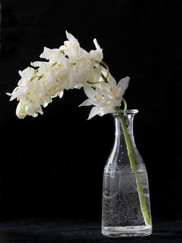 Orquídeas blancas