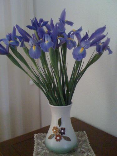 Iris azules