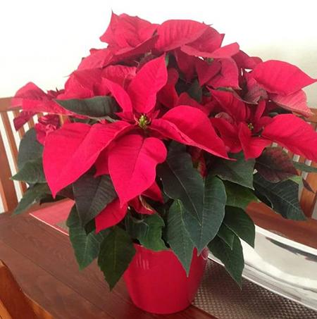 Ramo Especial Navidad