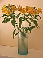 Alstroemeria Amarilla