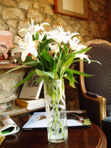 Lilium blanco
