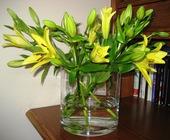 Lilium amarillo