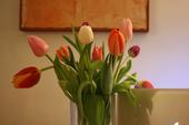 Tulipanes multicolor